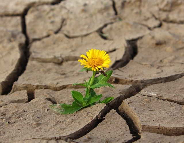 La sécheresse sévit pendant la canicule