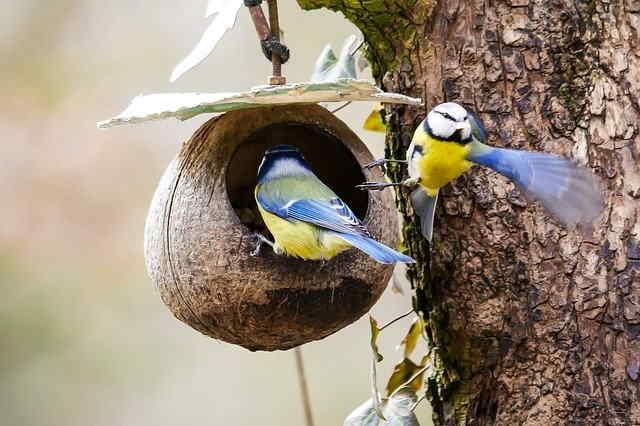 Confinés dans un nid douillet