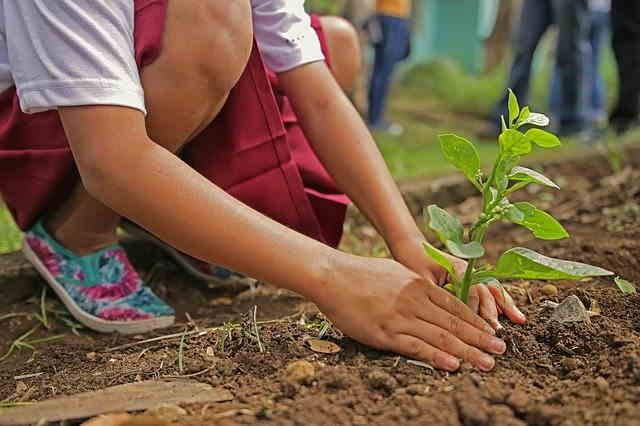 Planter un potager avec les enfants