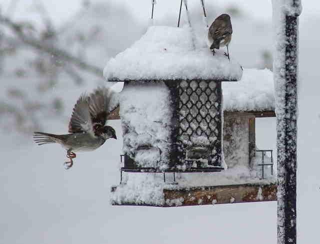 Mangeoire oiseau hivernation