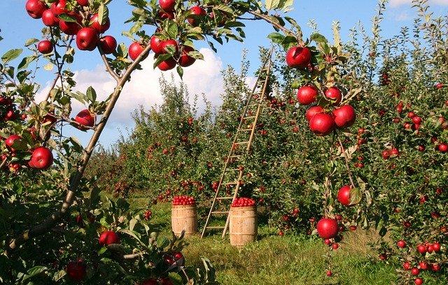 Zonage en permaculture