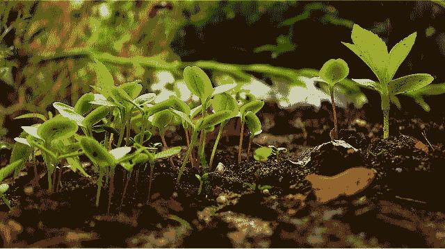 Respecter les saisons dans un jardin écologique